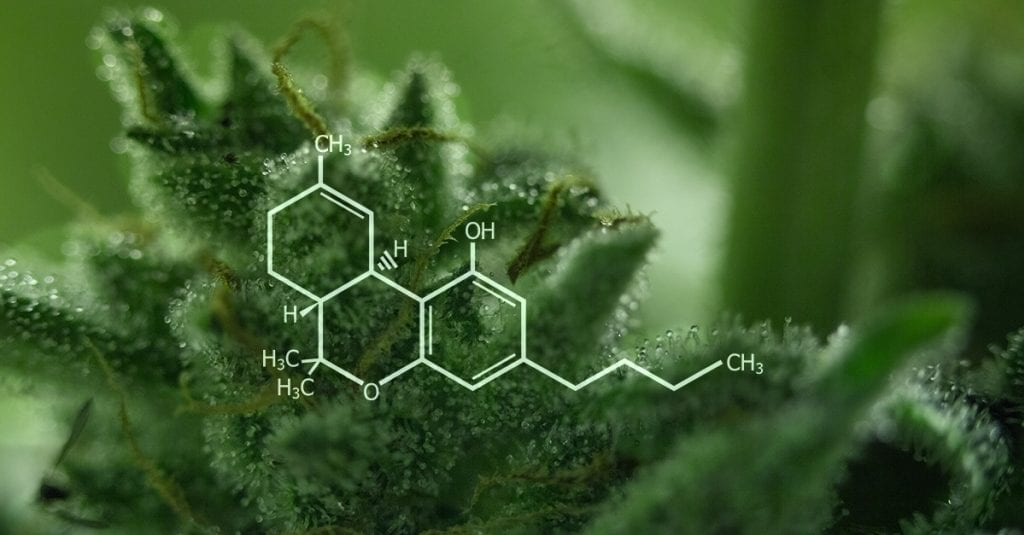 THC potency