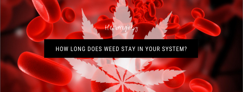 How long does weed stay in your system?