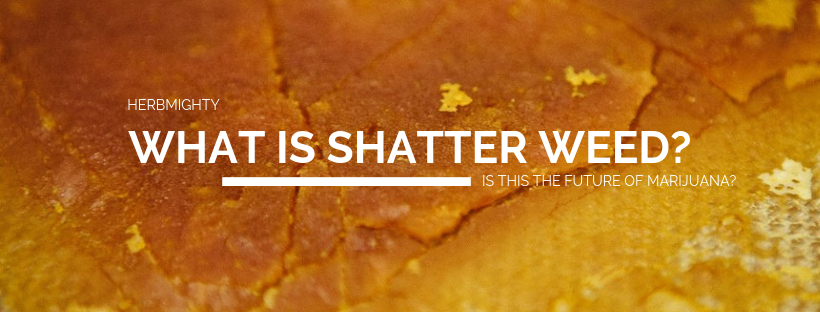 what is shatter weed?
